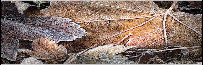 leaves leaf fall cold frost
